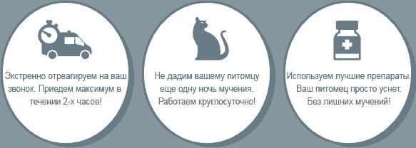 Кремация кошек и котов