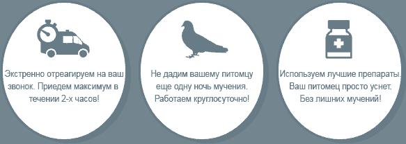 Усыпление голубей