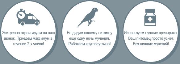 Усыпить попугая