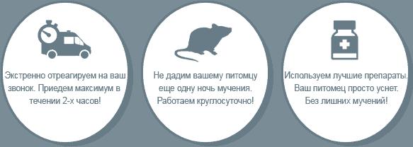 Усыпление крыс
