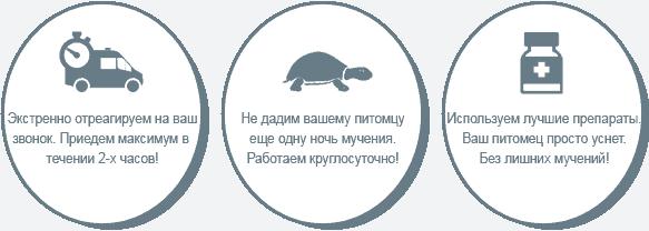 Усыпление черепах