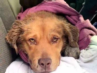 усыплению неизлечимо больных животных